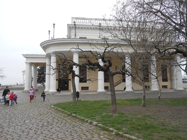загадочное дерево в Одессе