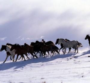 Лошадей из Киргизии тайными тропами гонят в Казахстан